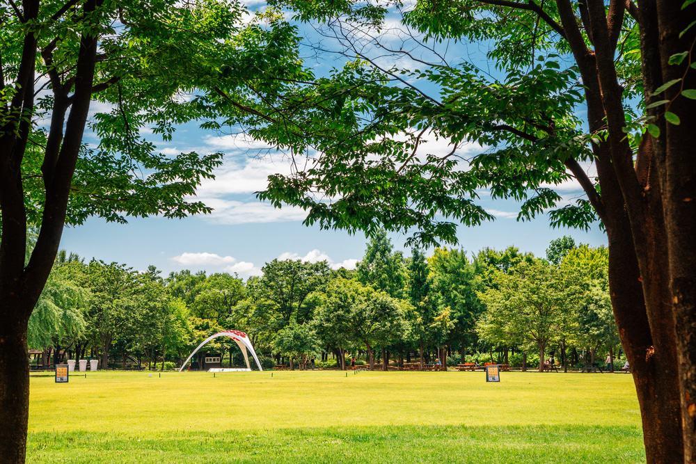 Bosque de Seúl