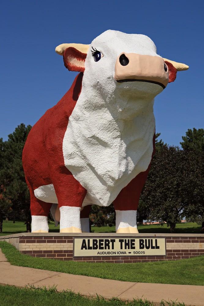 Albert el toro, Audubon